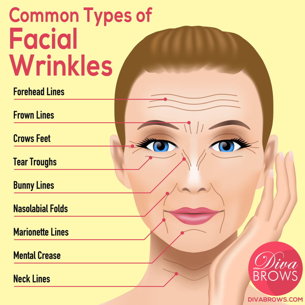 Common Facial Wrinkles for Fibroblast